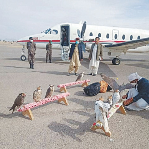 A member of the UAE's royal family is seen with falcons at Dalbandin Airport.—Dawn