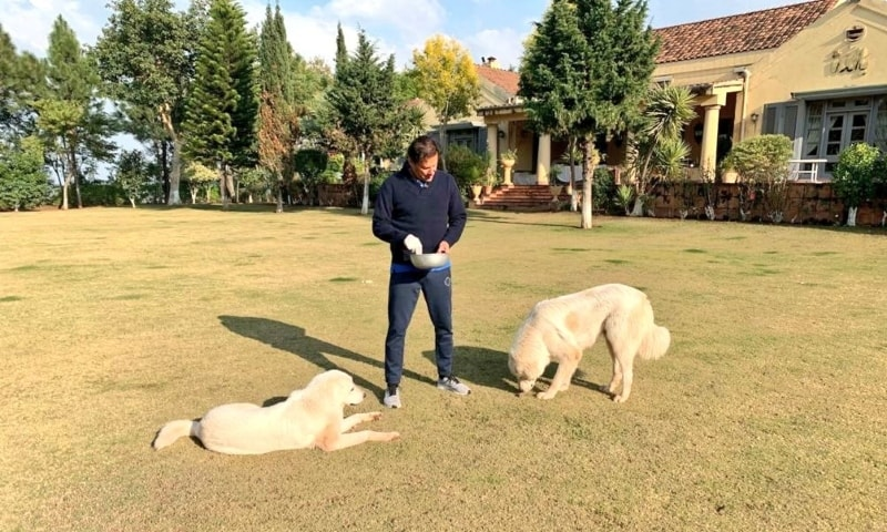 In this file photo, Prime Minister Imran Khan feeds his pet dogs at his Banigala residence. — Photo courtesy PM Imran Instagram