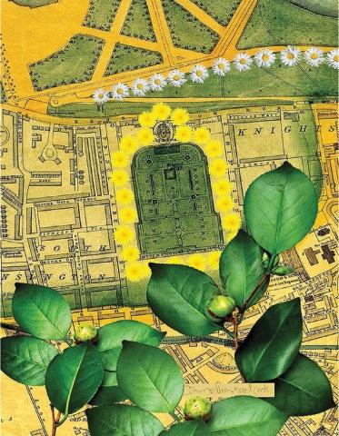 Gardening The Archive — Kensington Gardens, Cemellia, Daisy and Dendelion