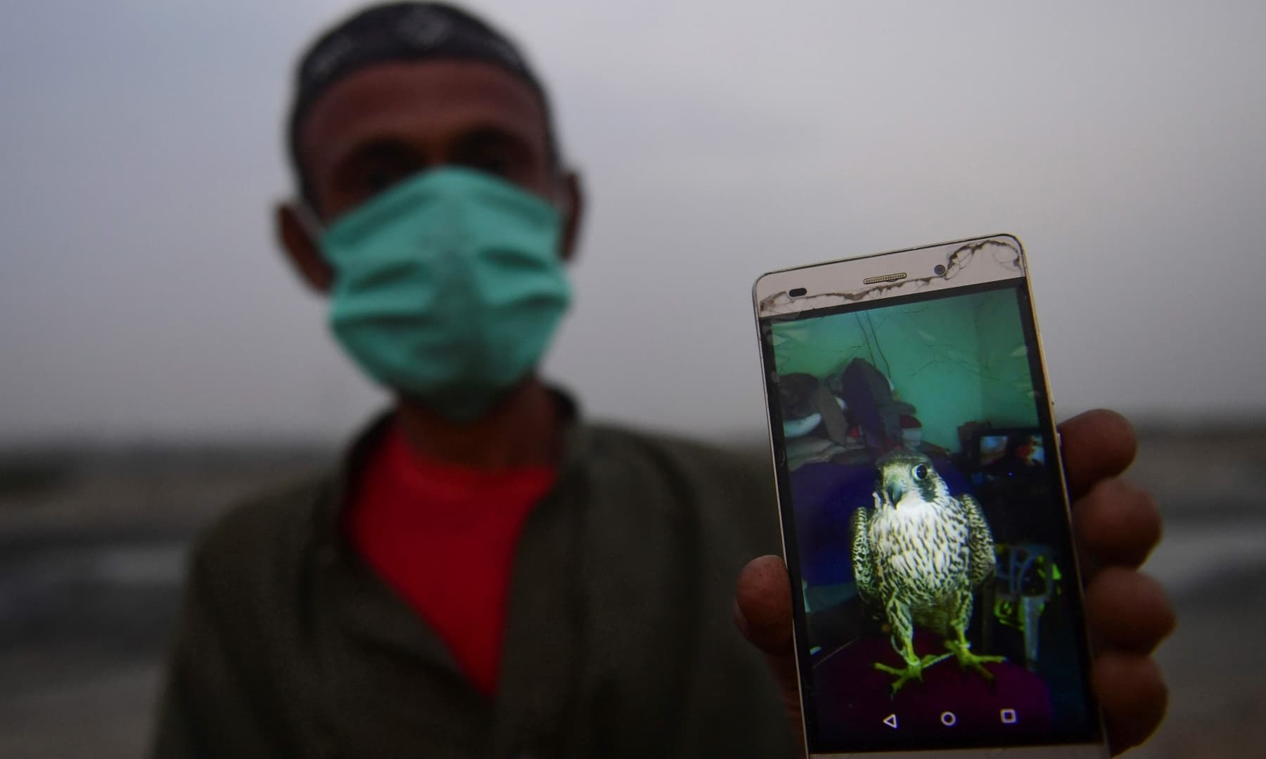 In this November 24, 2020, photo, poacher Muhammad Rafiq shows a picture on his mobile phone of a falcon he sold at a black market, in the coastal village of Ibrahim Hyderi on the outskirts of Karachi. — AFP