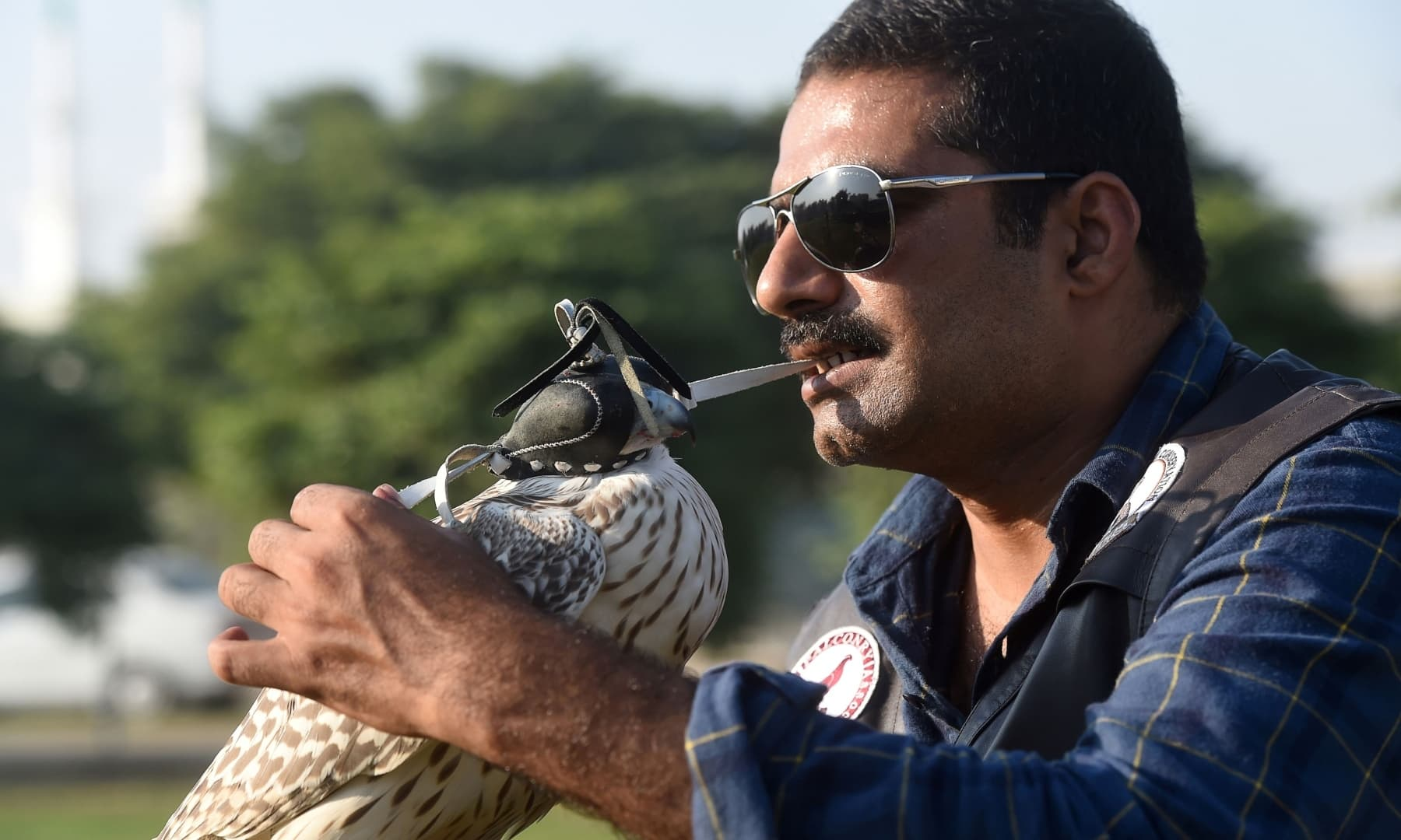 In this picture taken on November 23, 2020, Kamran Khan Yousafzai, a conservationist and president of the Pakistan Falconry Association, puts an eye mask on a falcon as he works on the rehabilitation of dozens of falcons seized by authorities from smugglers, in Karachi. — AFP