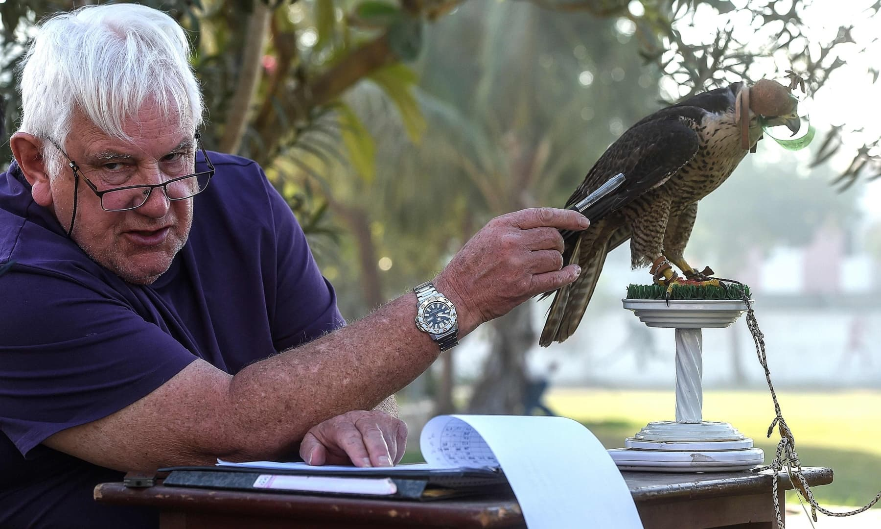 Bob Dalton, a veteran falcon conservationist and project co-ordinator for Project Lugger, weighs a falcon as he works on the rehabilitation of falcons seized by authorities from smugglers, in Karachi in this Nov 23, 2020, photo. — AFP