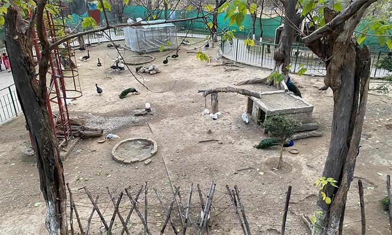یہ بہت خوبصورت جگہ ہے، ایک بہت بڑے پنجرے میں ہزاروں پرندے موجود ہیں