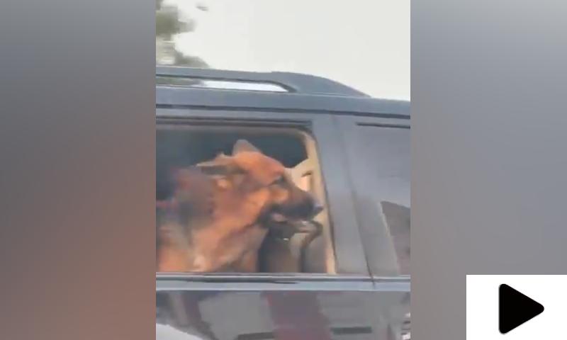 گورنر ہاؤس کراچی کی گاڑی میں کتے کی سیر کی ویڈیو وائرل