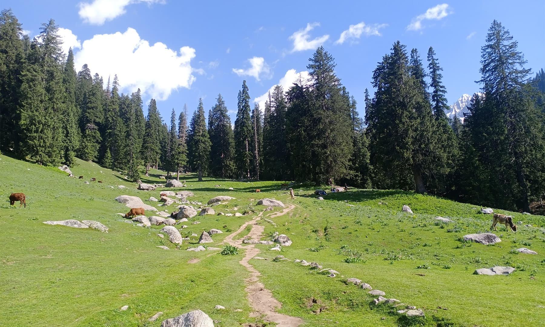 کنڈیل شئی بانال کا منظر — تصویر: عظمت اکبر