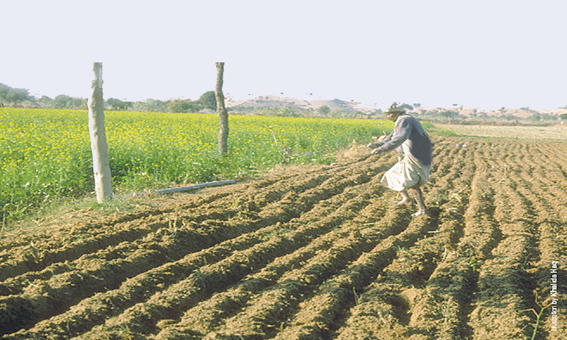 The Agriculture Transformation Plan 2021, shared by the Ministry of National Food Security and Research (MNFSR) on Friday with Dawn, seeks to revolutionalise the agri-input regime to substantially increase production of major rabi and kharif crops. — File photo