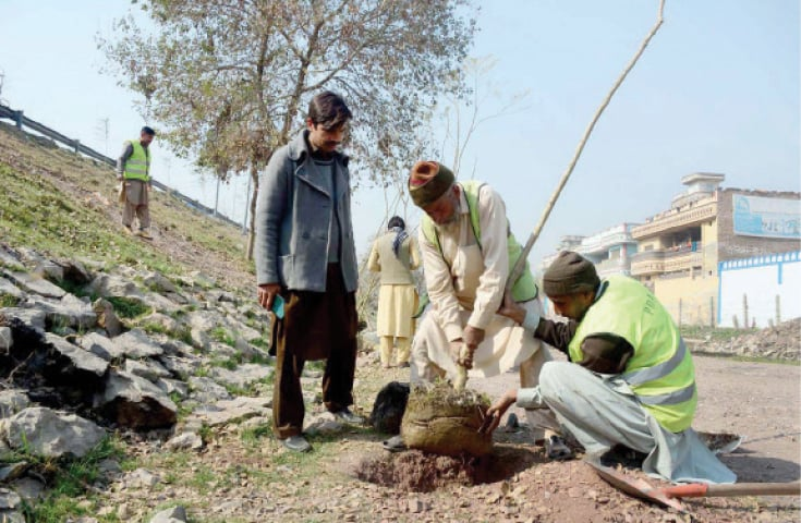PDA workers plant a sapling along the motorway in Peshawar on Monday. — APP