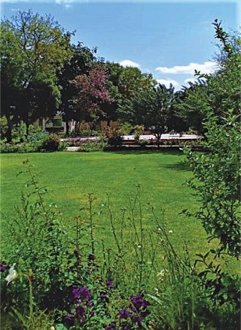 A healthy green vista
