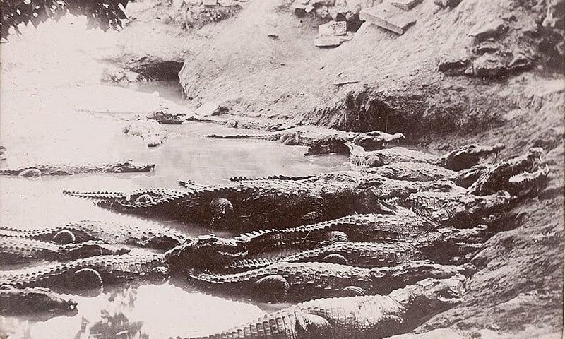 1910ء کے آس پاس لی گئی منگھوپیر کے تالاب کی تصویر