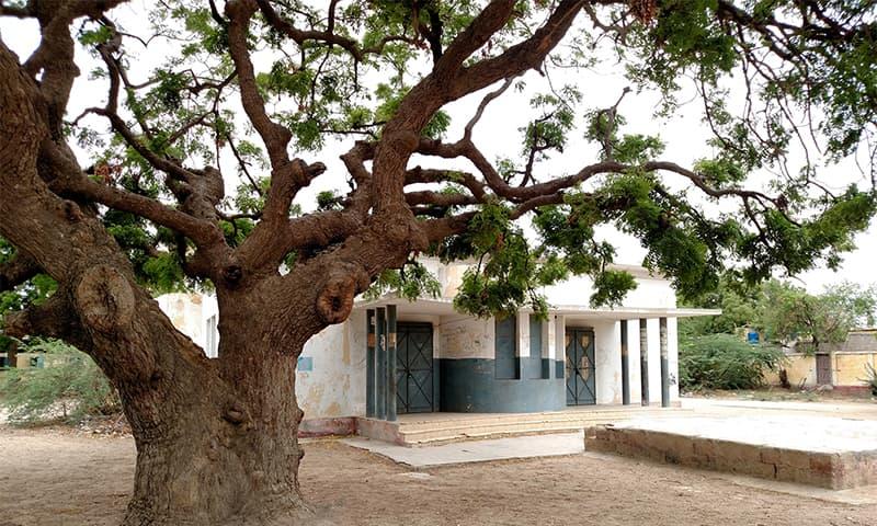 اسکول میں لگا ایک پرانا نیم کا درخت