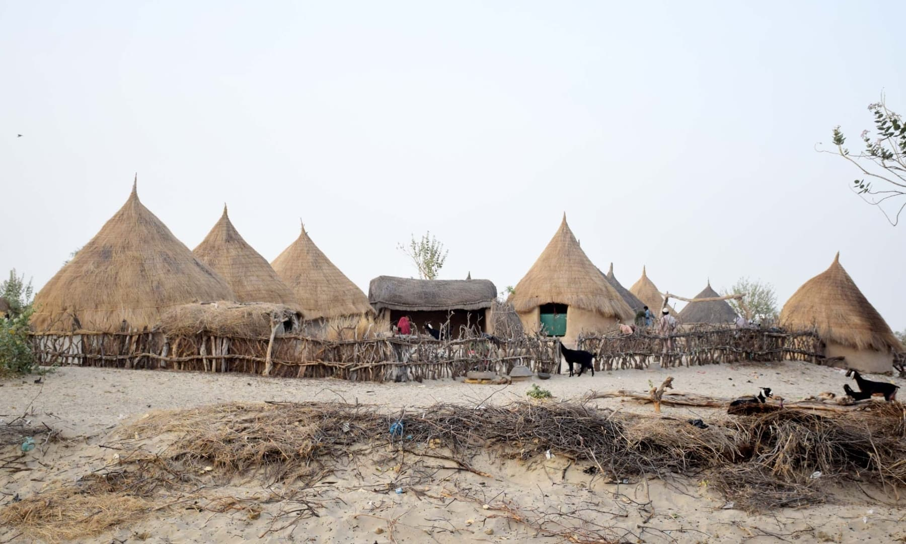 Huts made of thatched straw dot the desert's landscape in Achhro Thar, Khipro, Sindh. — Photo by Umair Ali