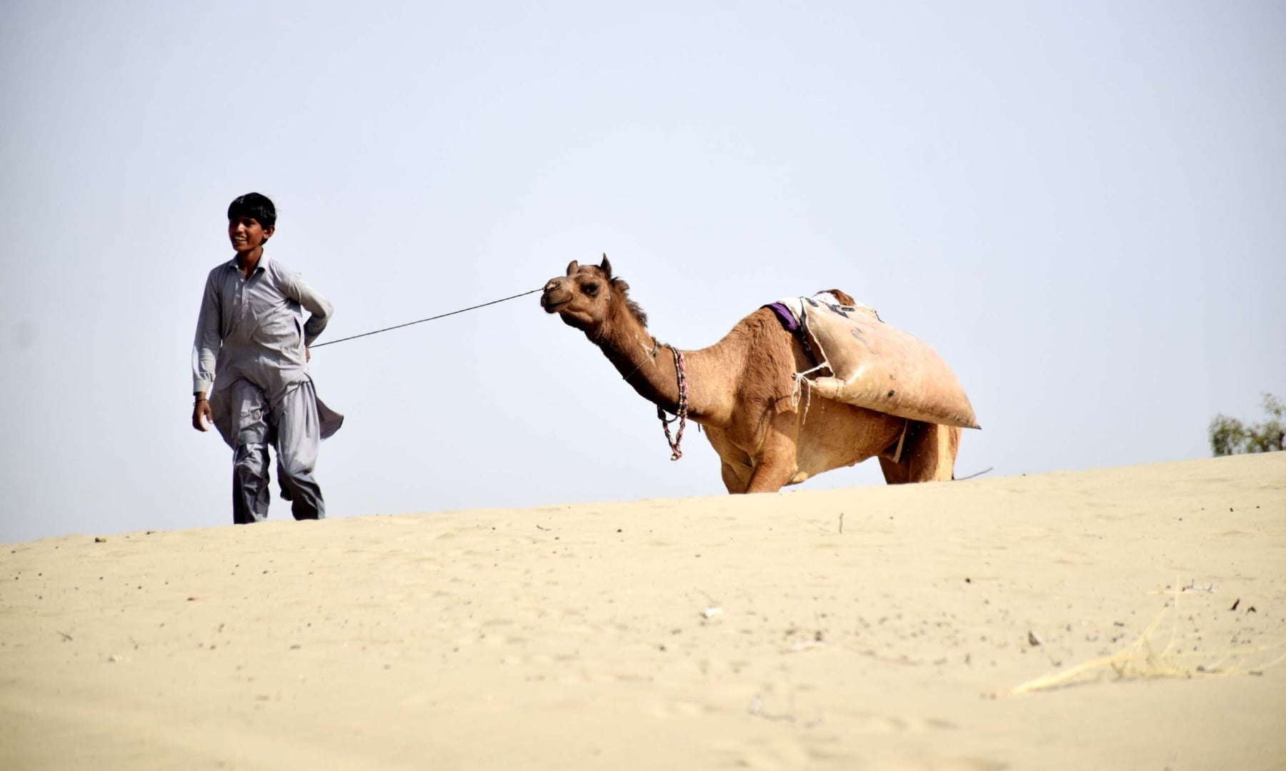 A man walks his camels among the sand dunes in Achhro Thar, Khipro, Sindh. — Photo by Umair Ali