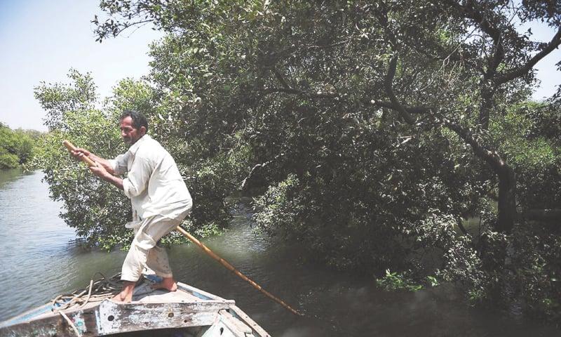 A fisherman manoeuvering his boat along mangrove swamps in Karachi | AFP