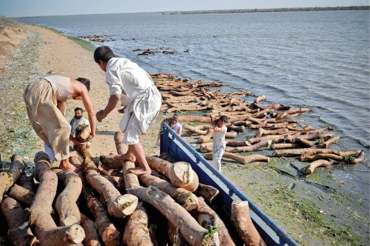 The 'timber mafia' at work | Fahim Siddiqi/White Star