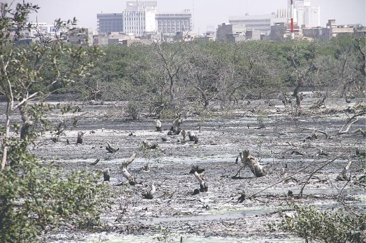 The thinning mangroves of Sindh | Fahim Siddiqi/White Star