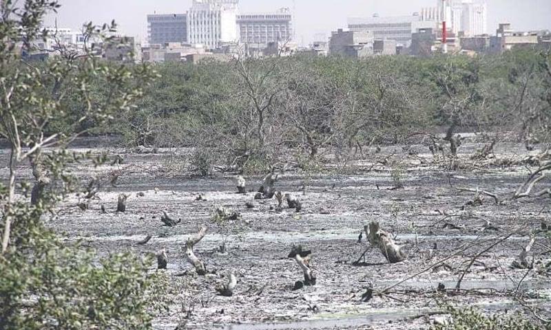 سندھ میں سکڑتے تمر کے جنگلات—تصویر فہیم صدیقی/وائٹ اسٹار