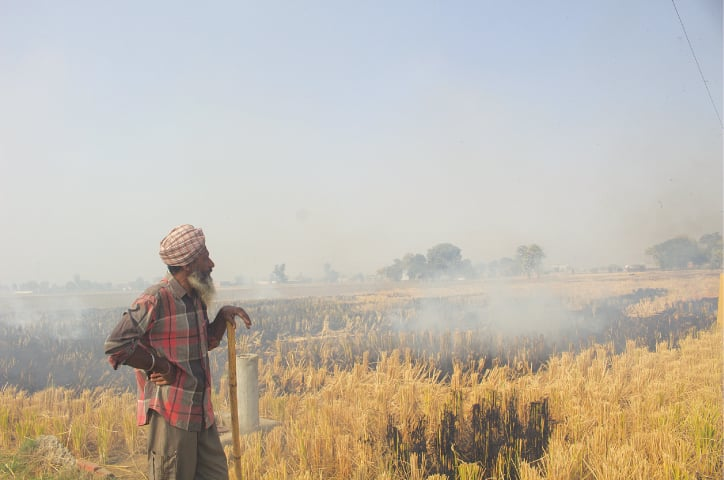 Crop-burning in Indian Punjab | Neha Thirani Bagri