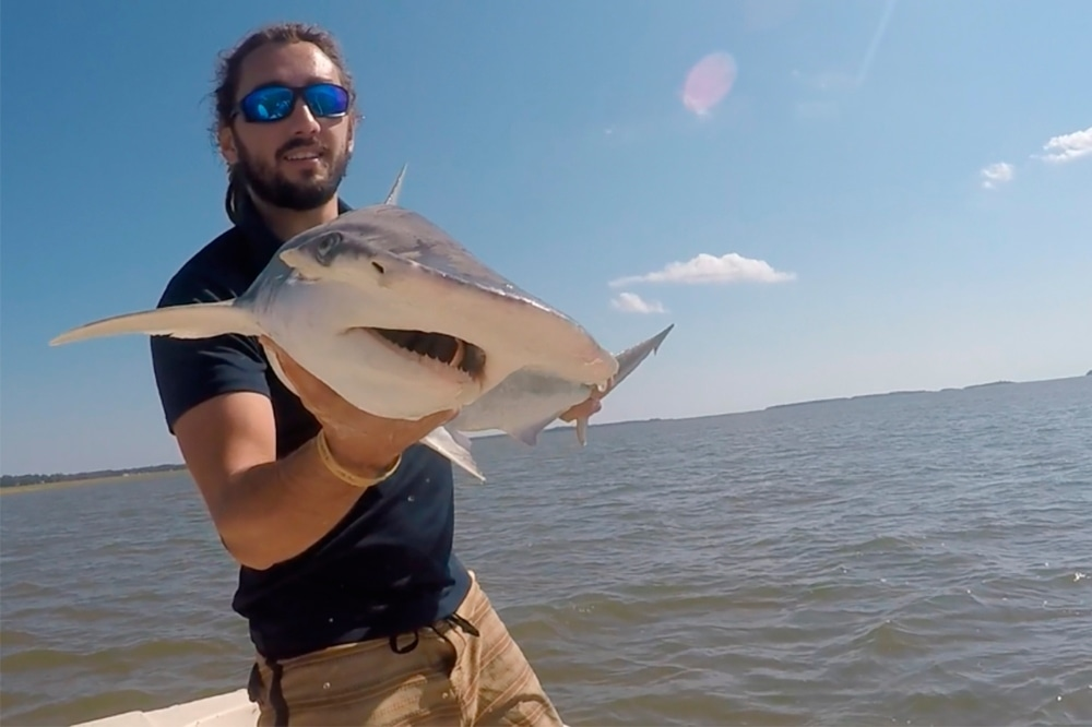 In this Sept 2015 photo taken by Colby Griffiths on the North Edisto River in South Carolina, scientist Bryan Keller holds a bonnethead shark. — AP