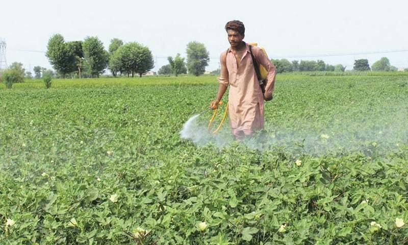 In this file photo, a farmer in Multan spray pesticide in a field. — APP/File