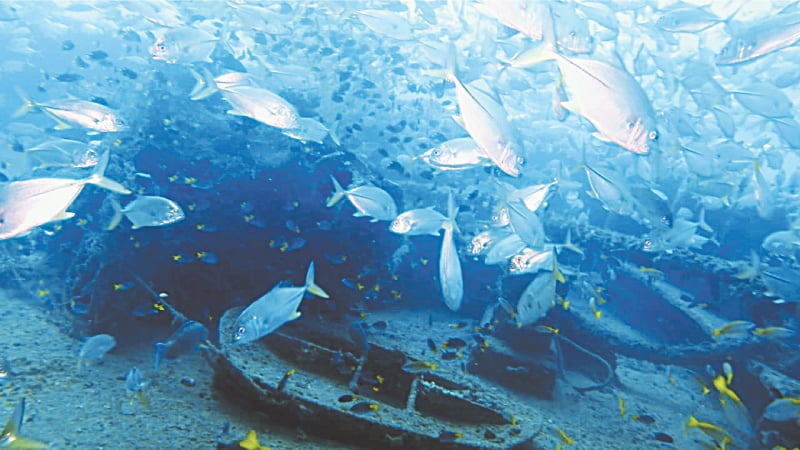 There is abundant marine life at this wreck. It is, essentially, their nursery