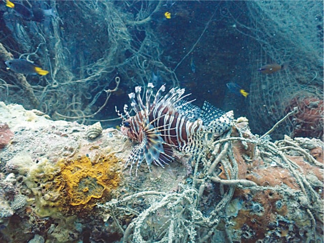 A native but rarely sighted lionfish
