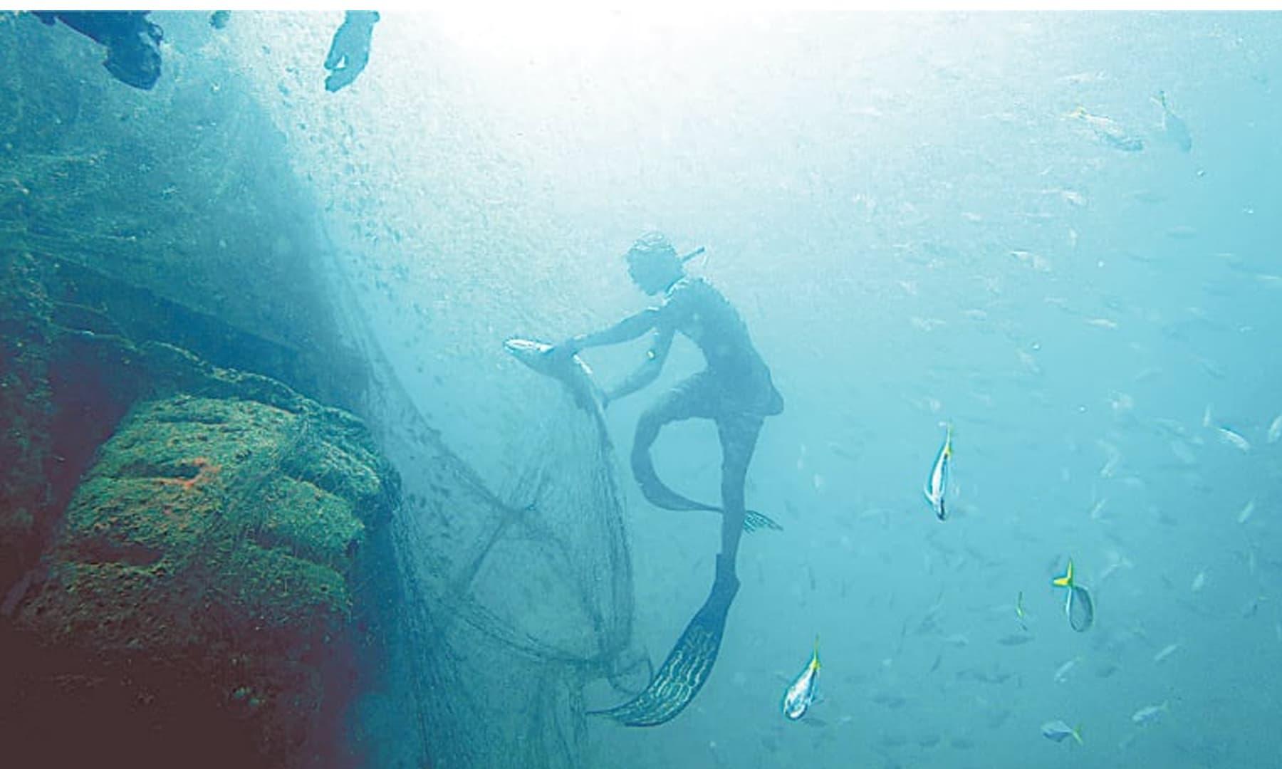 جال سے مچھلی کو آزادی دلاتے ہوئے