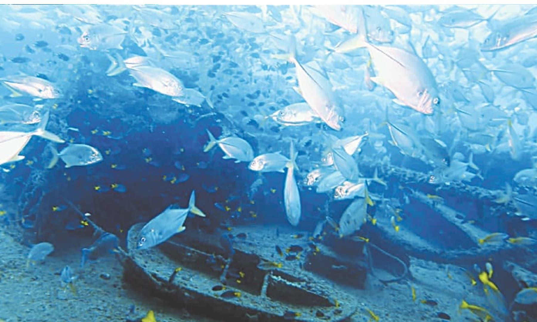 اس ملبے میں سمندری حیات کی بہتات ہے۔ یہ بنیادی طور پر ان کی نرسری ہے
