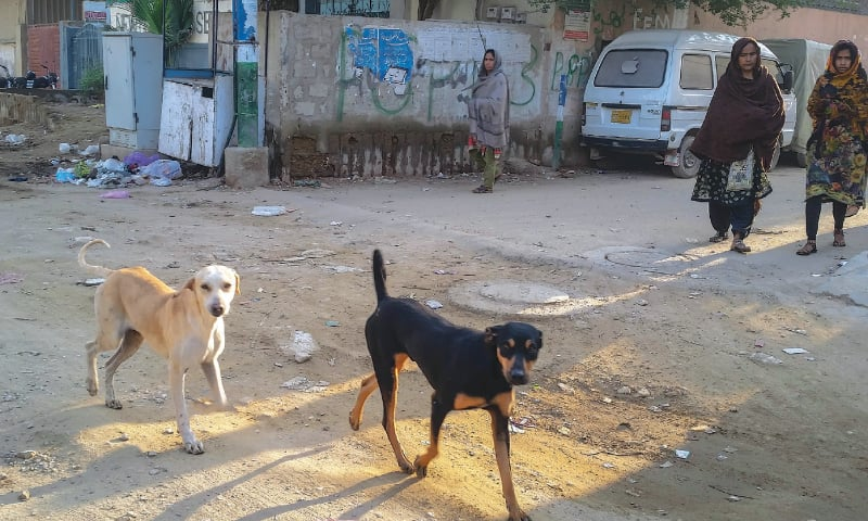 A pair of hounds roams a city street in this file photo.—Fahim Siddiqi/White Star