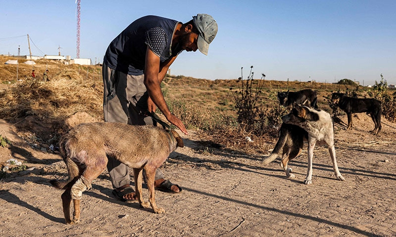 A worker tends to a dog at the Sulala dog shelter in Gaza City on May 24, 2021, which has received several wounded animals due to the 11-day conflict between Israel and  Hamas. — AFP