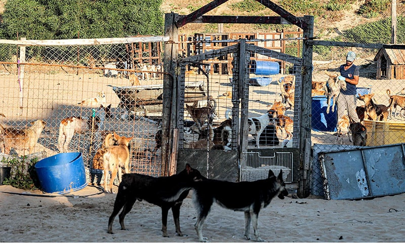 This picture taken on May 24, 2021 shows a general view of the Sulala dog shelter in Gaza City, which has received several wounded animals due to the 11-day conflict between Israel and Hamas. — AFP