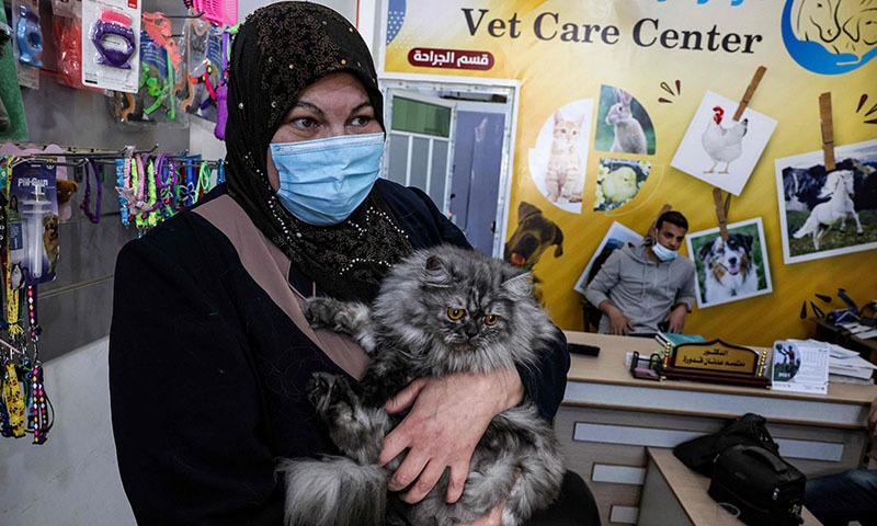 Palestinian cat owner Amani Abu Shaaban holds her feline companion to her chest while waiting at a veterinary clinic in Gaza City on May 24, 2021. — AFP