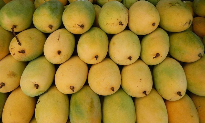آم کو پھلوں کا بادشاہ کیوں کہا جاتا ہے؟ آپ بھی جان لیں
