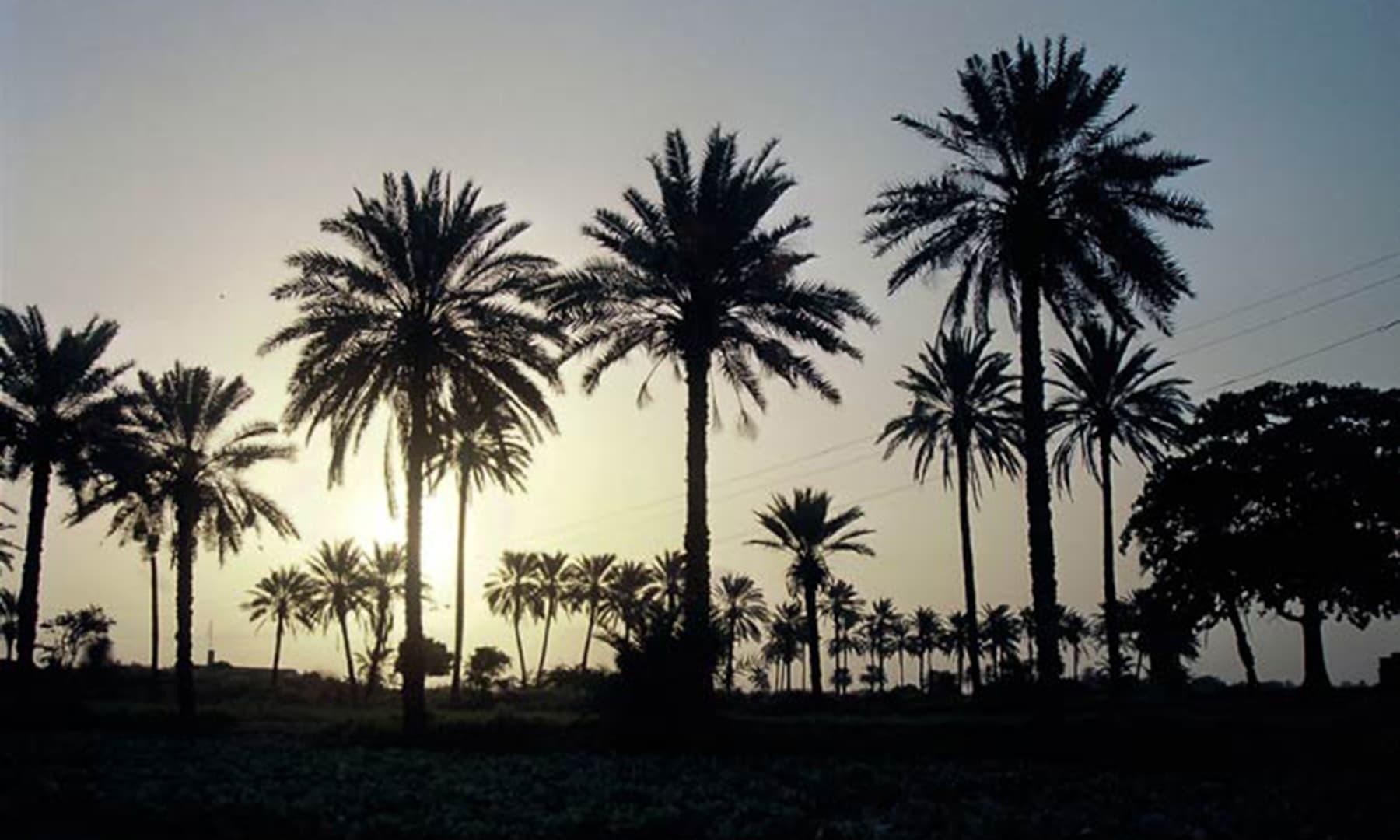 ملیر، کراچی (2011)—اسد امان