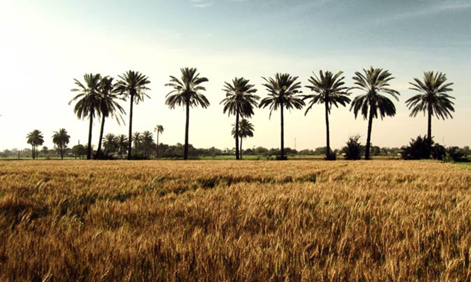 ملیر، کراچی (2011)— اسد امان