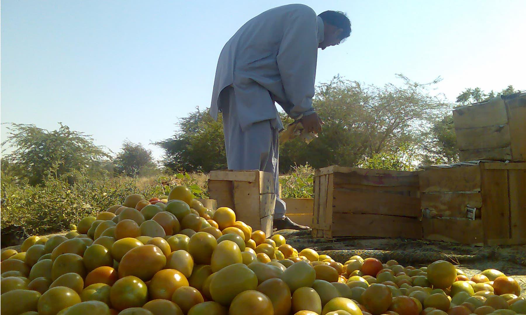ملیر کا ایک کسان—گل حسن کلمتی