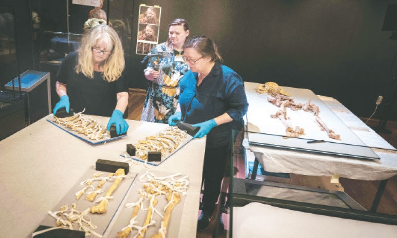 EMPLOYEES from a museum in Denmark unpack the skeleton of a man found in a mass grave in Oxford, England.—AFP
