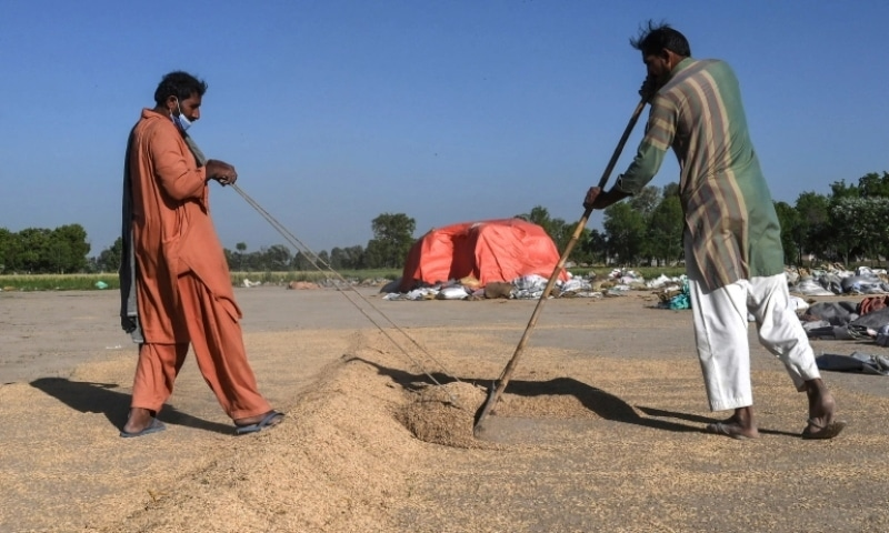 Workers dry grains of rice before a refining process at Al-Barkat Rice Mills on the outskirts of Lahore. — AFP