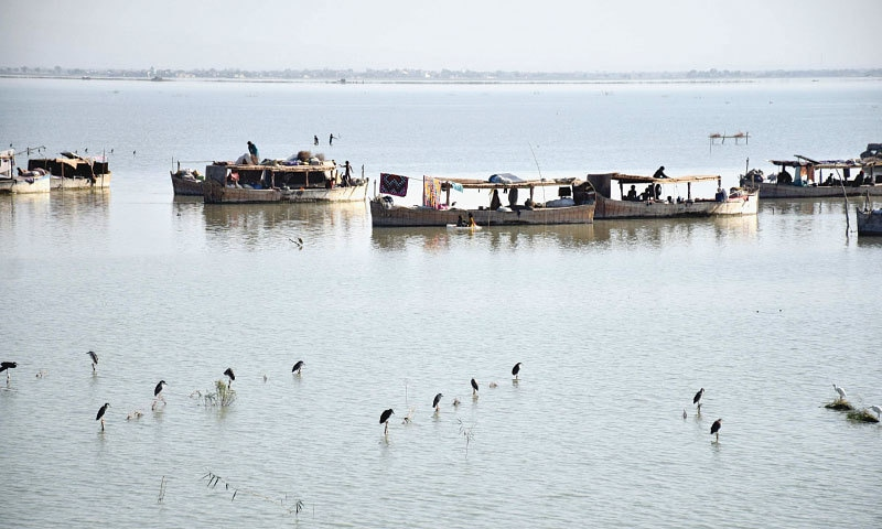 Houseboats dot the waters ofManchharlake as birds sit on the aquatic vegetation | Photos by Umair Ali