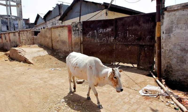 There have been several incidents of cow vigilantism in India in the past. — Reuters/File