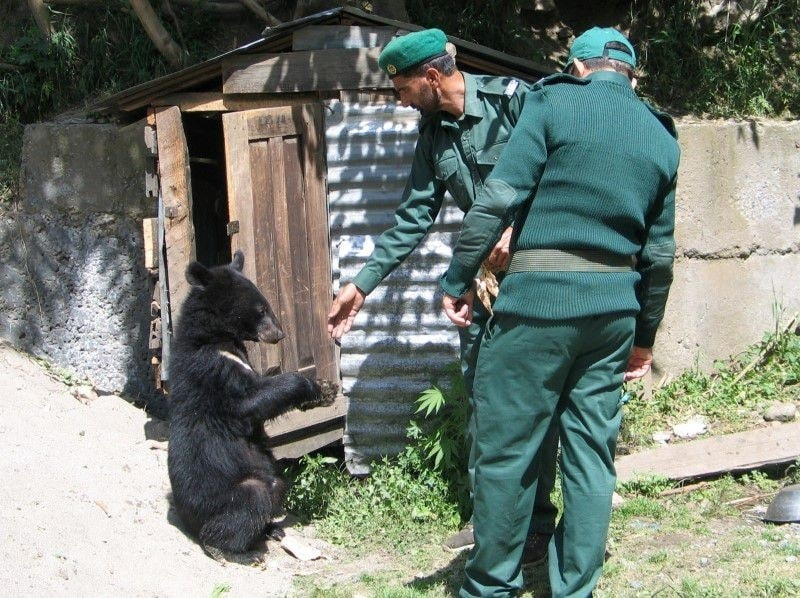 Wildlife watchers, feed one of two Asian black bears, rescued a year ago near the Line of Control (LoC), at the Wildlife and Fisheries department in a Dawarian village in Neelum Valley, Pakistan-administrated Kashmir, Reuters.