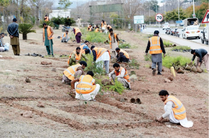 CDA has categorised houses  where trees will be planted accordingly. — File photo