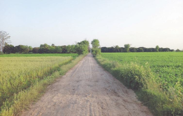 The Punjab government has promised to allot around 398,400 acres of  land to lumberdars (village headmen) across the province. — File