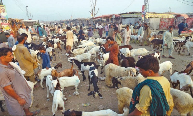 Health experts fear that Eidul Azha can provide an opportunity to the virus to bounce back. — Online/File