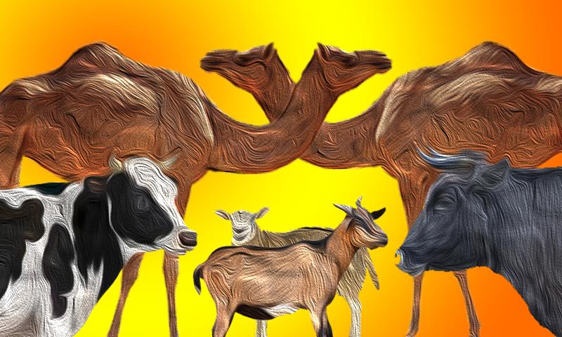 قربانی کے جانوروں کا ایک مکالمہ