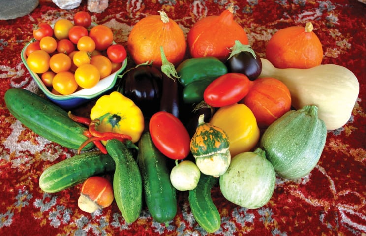 Colourful cucurbits | Photos by the writer