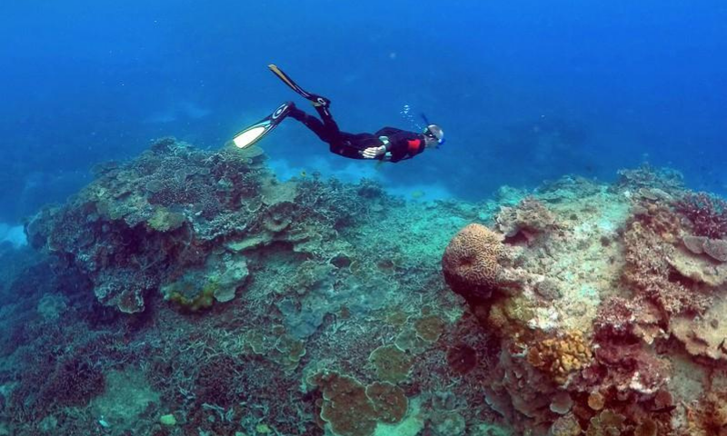 """A man snorkels in an area called the """"Coral Gardens"""" on the Great Barrier Reef in Australia. — Reuters/File"""