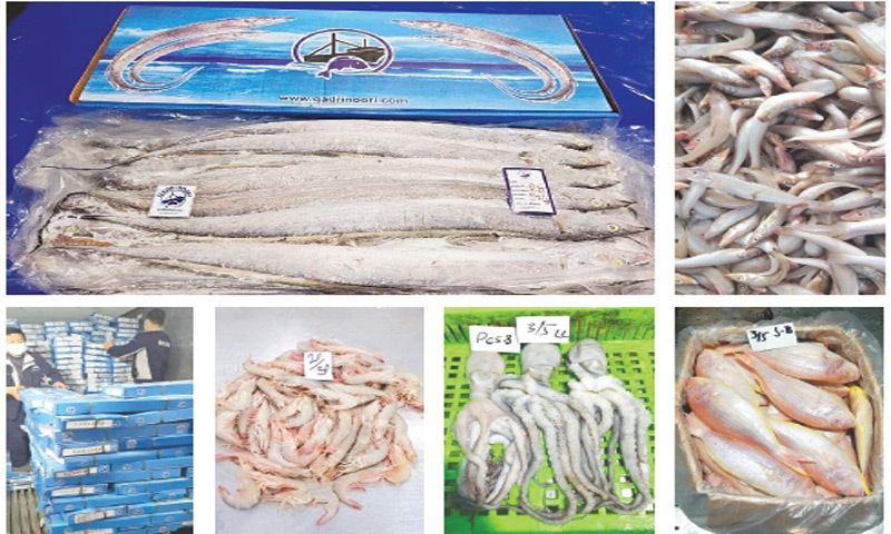 THIS combo picture shows seafood (clockwise) ribbon fish, eels, Japanese thread fin bream — also known as JTB — octopus and shrimps in baskets. Workers at a seafood processing unit arrange boxes of fish and shrimps.