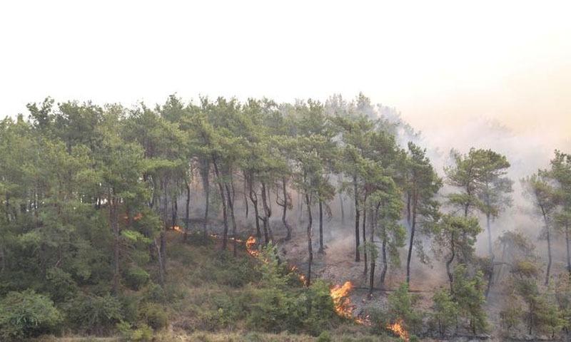 ترکی میں آگ لگنے کے متعدد واقعات، 4 افراد ہلاک 180 زخمی