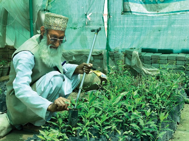 Misal Khan tends to saplings in his nursery | Photo by the writer