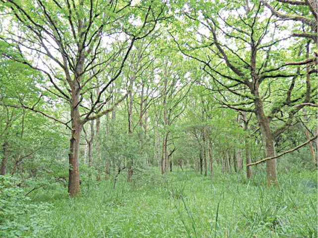 A complex, multi-layered woodland emerged which became a habitat for a variety of wildlife